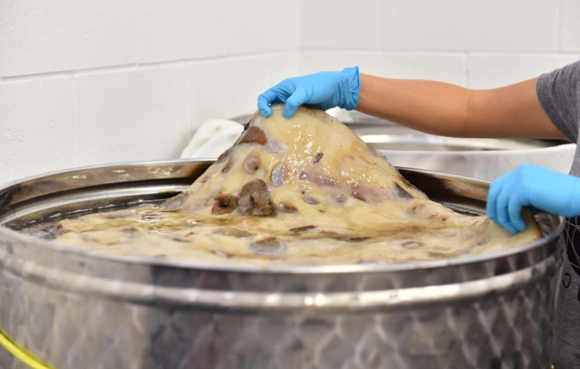 Wentsi Young shows off her healthy, three-year old scoby inside the 400-litre fermentation tank at I Crave Natural Foods, where she bottles Culture Kombucha.