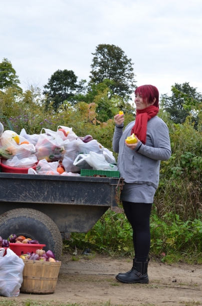 Gleaning refers to the collection of leftover crops from farmers' fields after they have been commercially harvested.