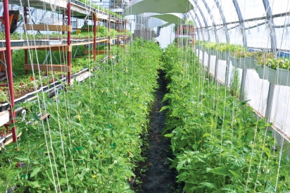 Greenhouse at Bryson's Farm in Shawville, Quebec