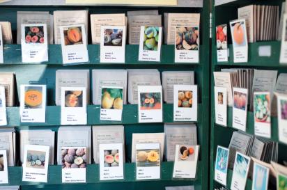 Heirloom seeds at Greta's Organic Gardens