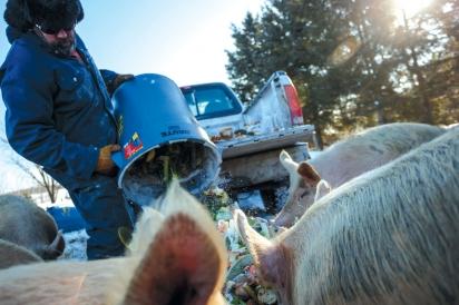pig-food program