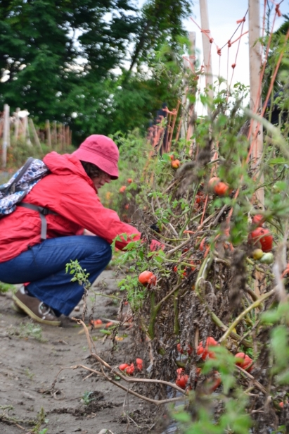 Through the Parkdale Food Centre's gleaning program, clients will now have opportunities to visit the very farms where our local produce is grown.