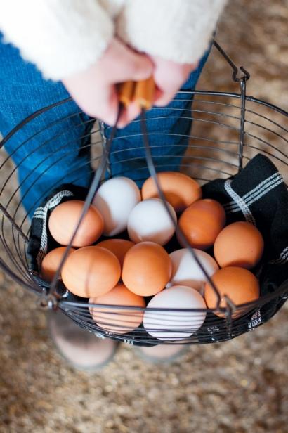 eggs from Greta's Organic Gardens