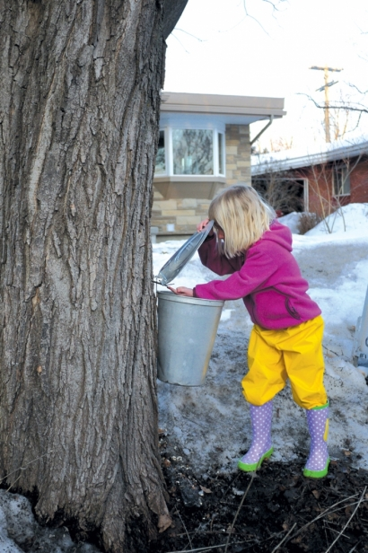 Lucy Paris performs her quality control inspection of the sap bucket.