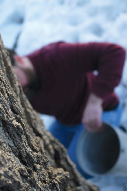 Urban tree tapping for maple syrup