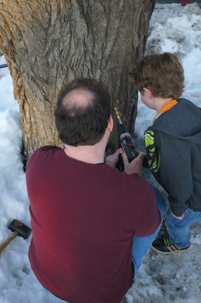 Dell Drummond prepares to drill his maple tree with the help of his neighbour Gerry Tomalty.