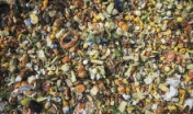 This compost goes to the pigs at Mariposa Farm.